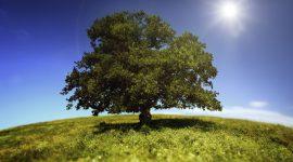 Entro la fine dell'anno, 700-800 impianti di biogas in Italia