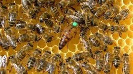 13 paesi sostengono il bando UE dei pesticidi killer delle api